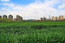 杭州等强省会时代来临 二线城市卖地收入大增